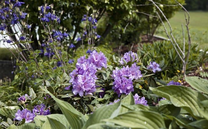 http://wordpress.p389444.webspaceconfig.de/wp-content/uploads/2017/01/gartenzauner-rododendron.jpg